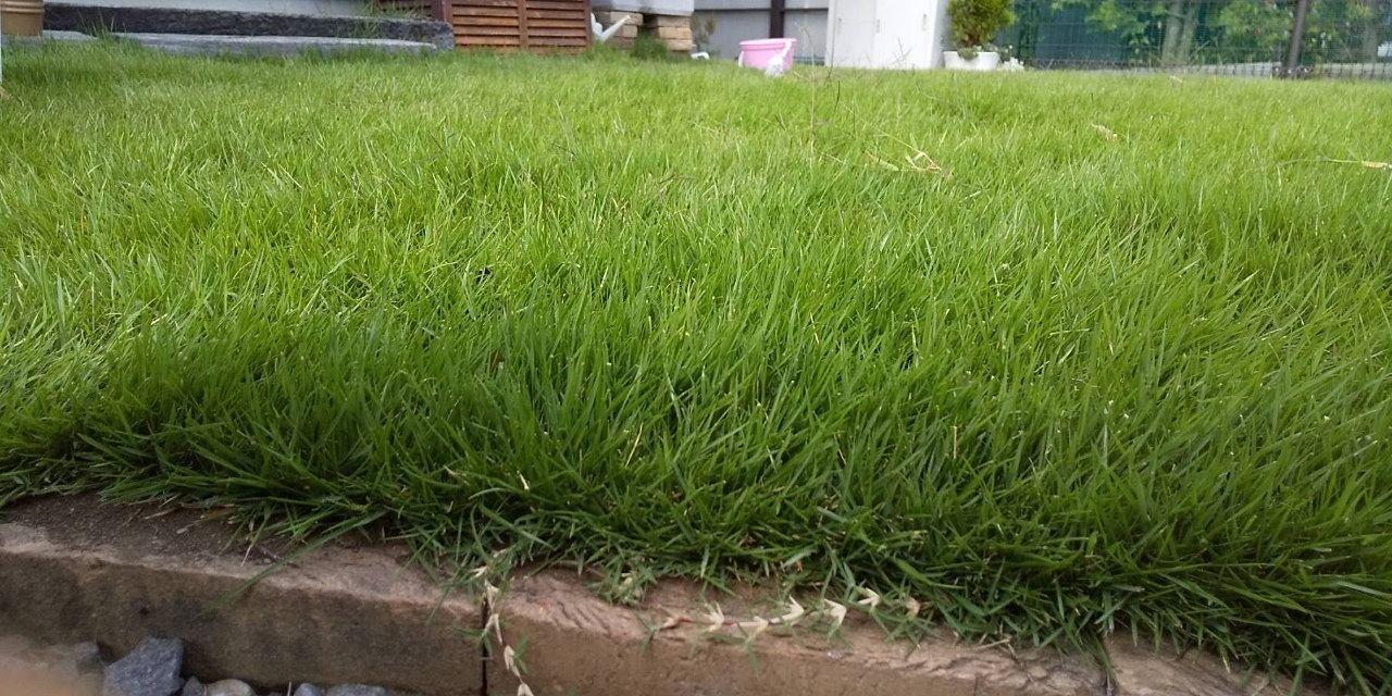 刈り揃えた芝生の庭です