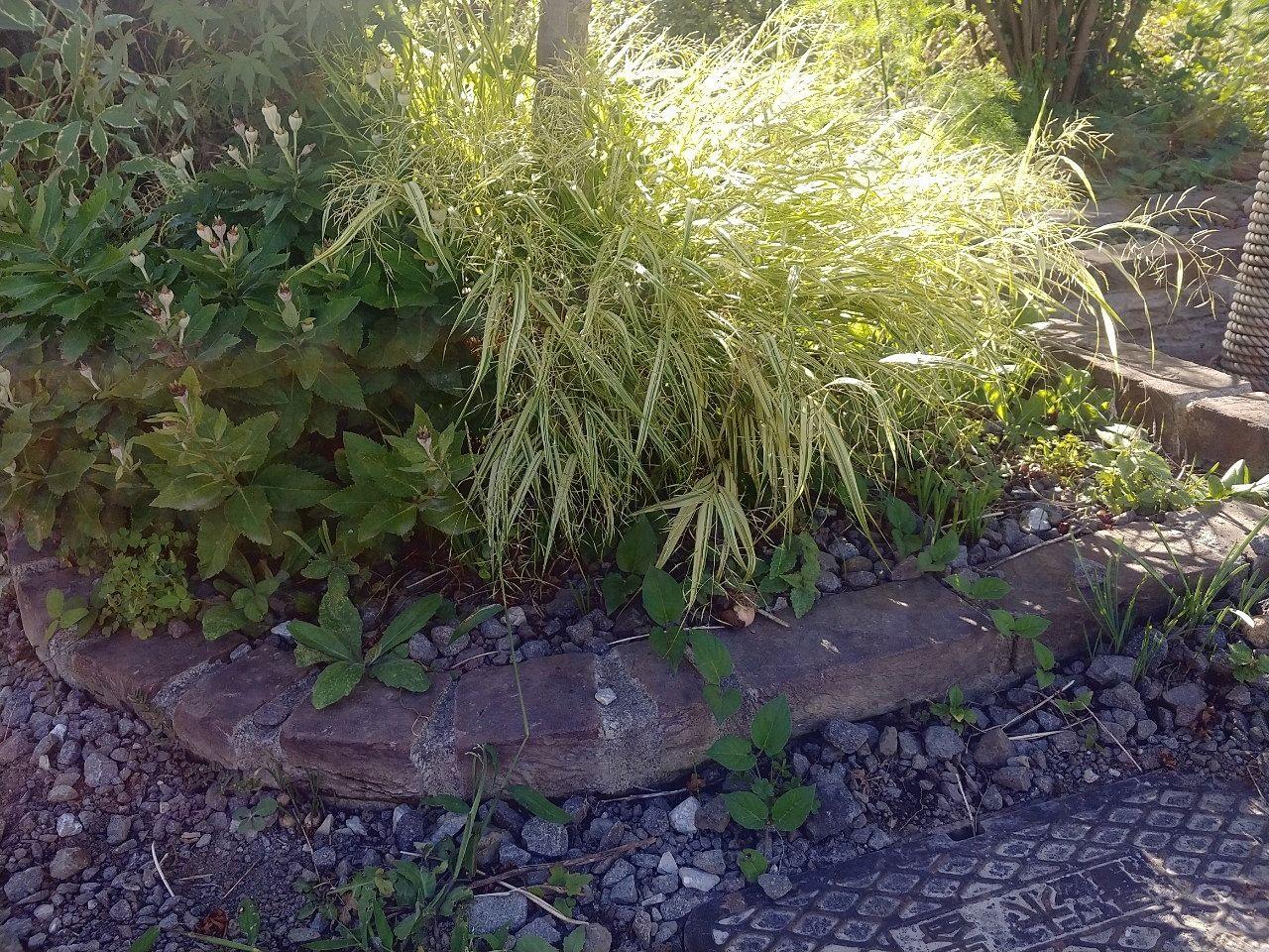 フウチソウの花壇です