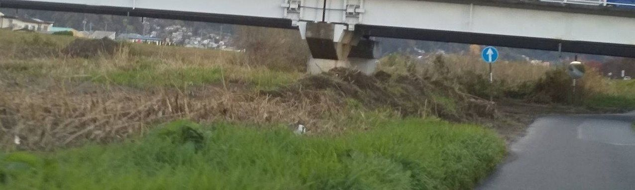 上川沿い通勤バイパス なぎ倒された河川の草