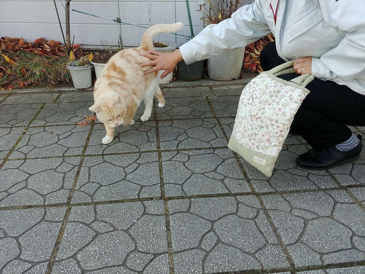 道中で猫に話かけるスタッフ