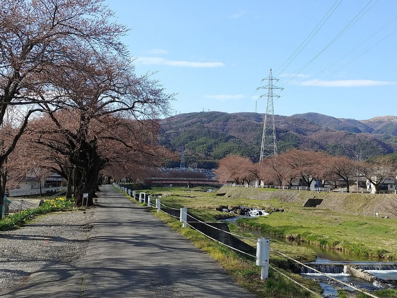 季節を感じる街道~岡谷市横河川の桜 現在の様子~