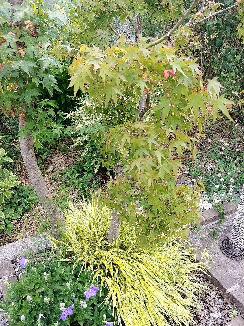 住み心地を考える✩ 庭木編