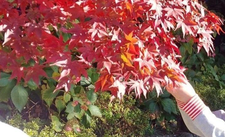 秋の山へおでかけ♪