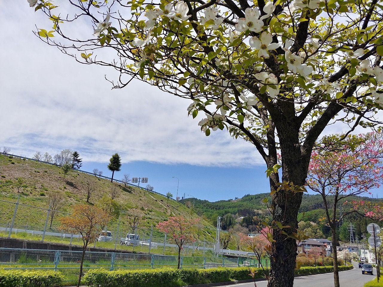 新緑の季節 車窓から薫風