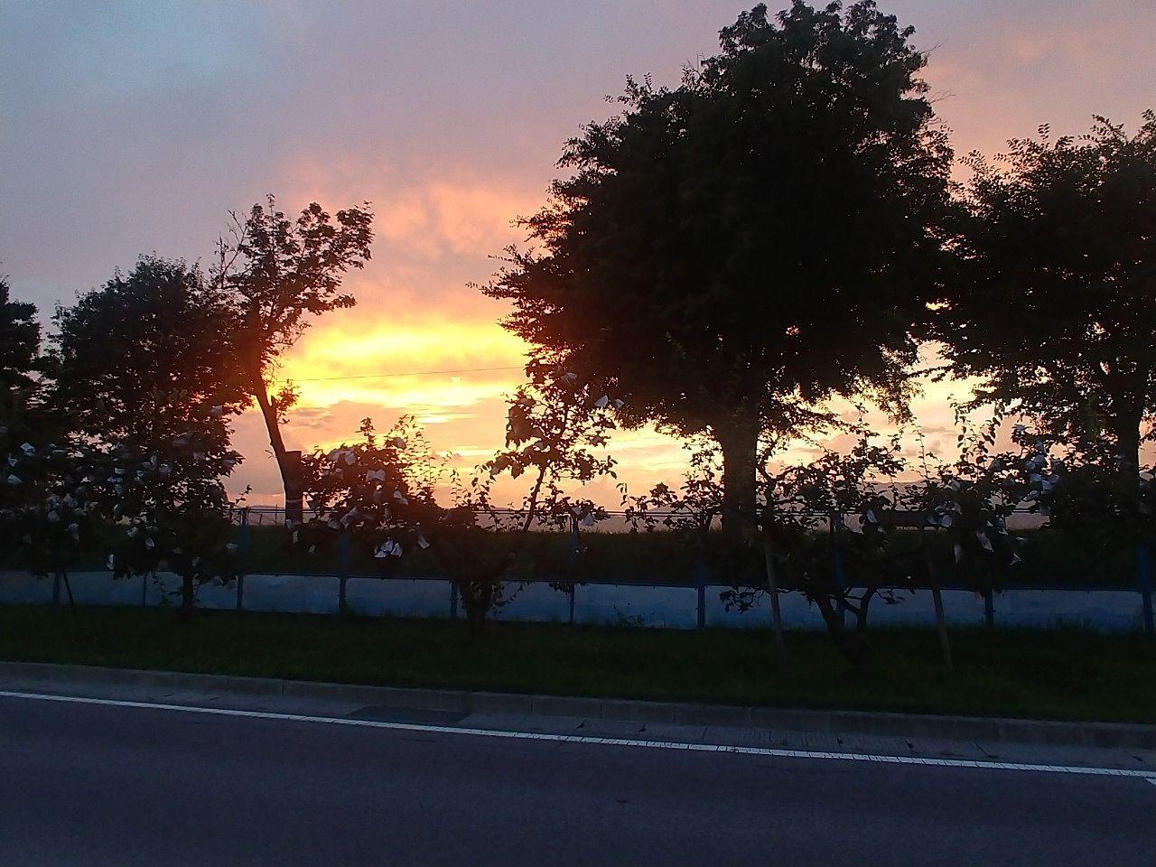 諏訪市湖岸通りで、かりん並木と夕日がきれいでした